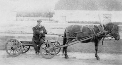 Ivanov em uma carroça tracionada por um híbrido de cavalo e zebra.